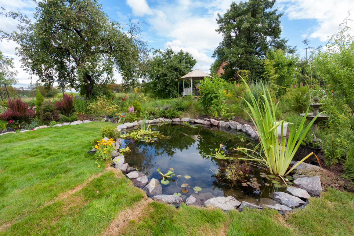Quelques plantes aquatiques incontournables pour votre bassin