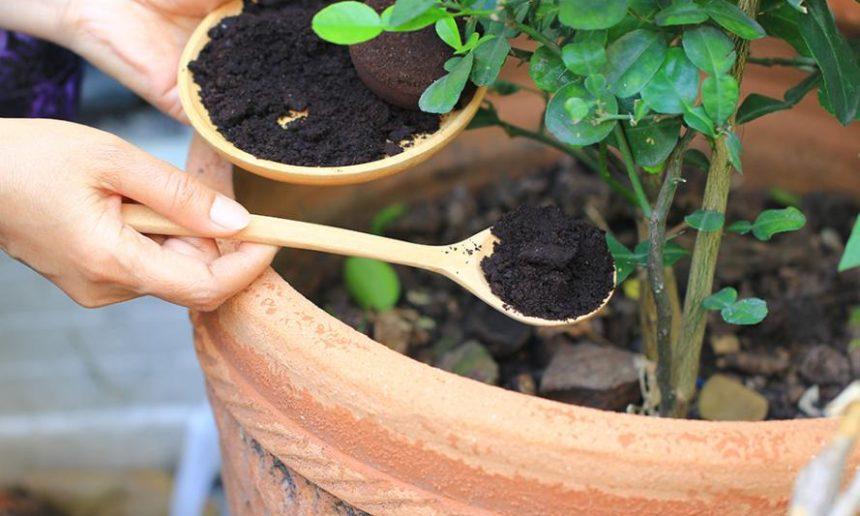 Le marc de café : l'or brun du jardin