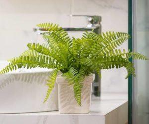 Fougère - Plante à adopter dans sa salle de bains - Bioflore
