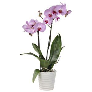 Orchidée - Bioflore