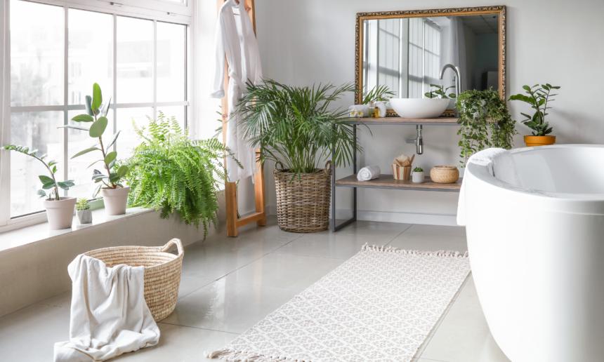 Quelles plantes adopter dans sa salle de bain ?