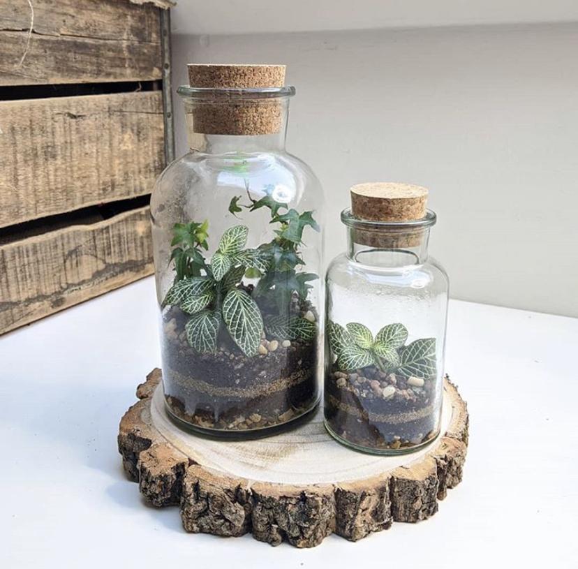 Comment créer son terrarium végétal ?