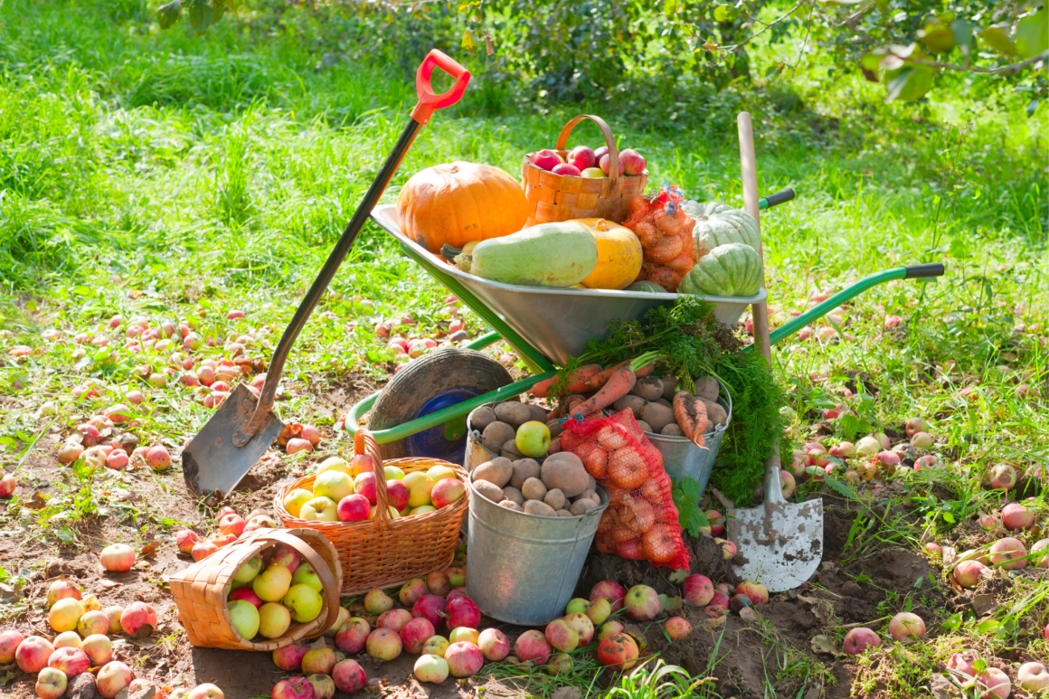 Que faire au jardin au mois de septembre ?