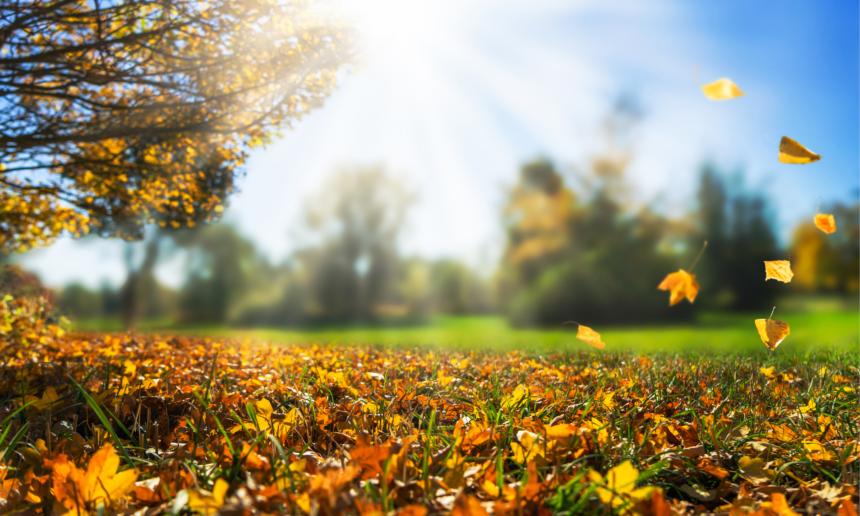 Que faire au jardin en octobre ?