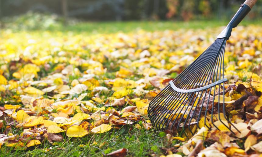 Que faire au jardin au mois de novembre ?