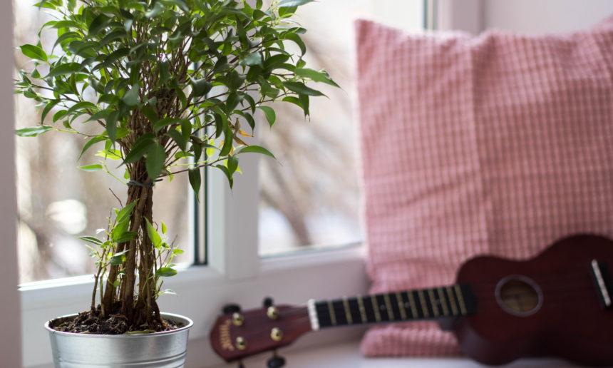 Le repos végétatif des plantes