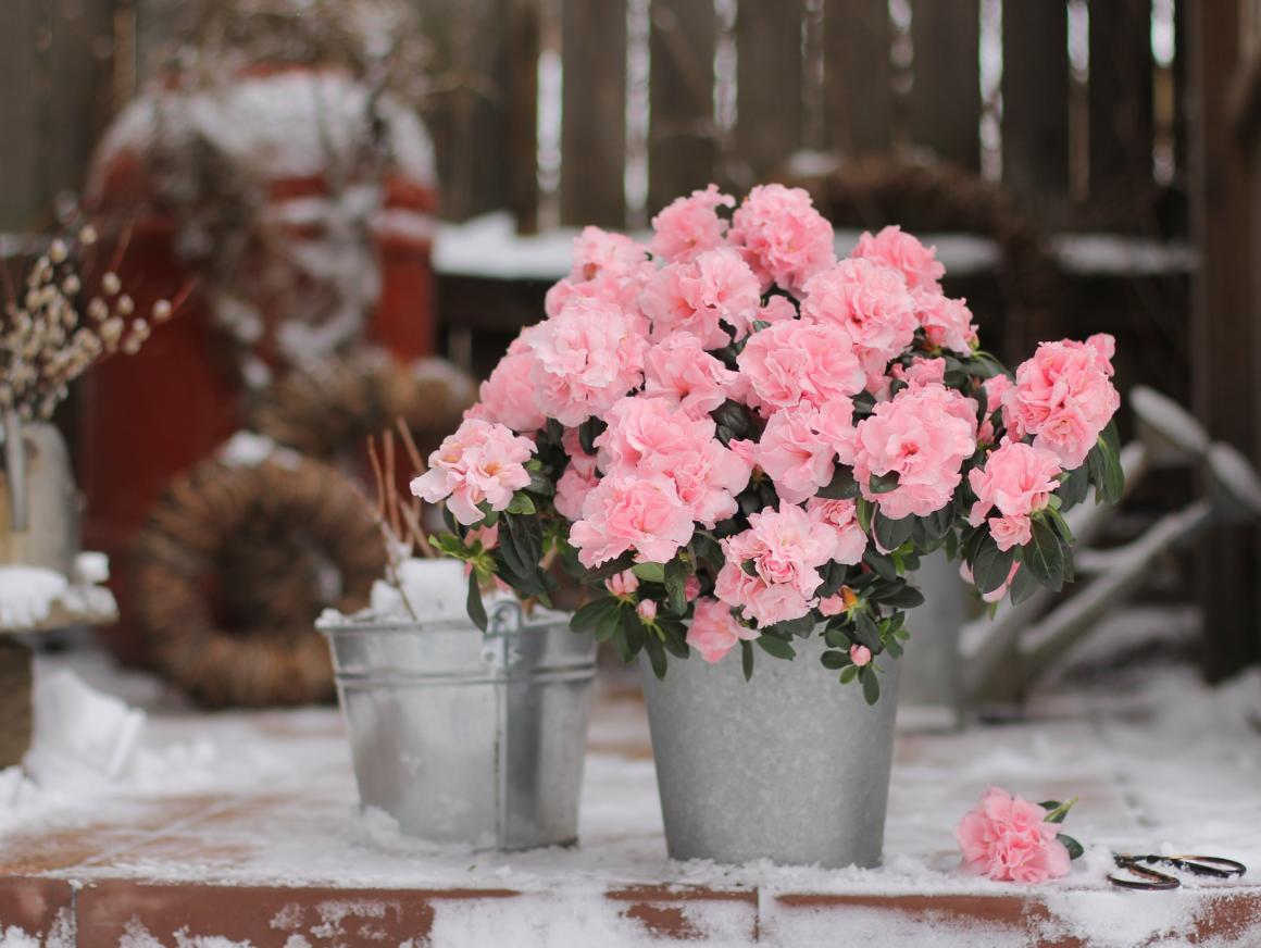 Plantes et fleurs qui fleurissent en hiver